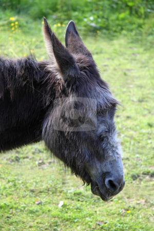 Donkey stock photo, Donkey on a green grass background by Birgit Reitz-Hofmann