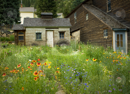 Colorado Summer Wildflowers and Mining Town stock photo, Classic spring and summer mountain historic mining town scene in Colorado. Great wildflowers, sunflowers and radiant new buffalo grasses. Great for travel, adventure, wilderness, ecology, conservation, seasonal and exploration themes. by Jeff DeMent