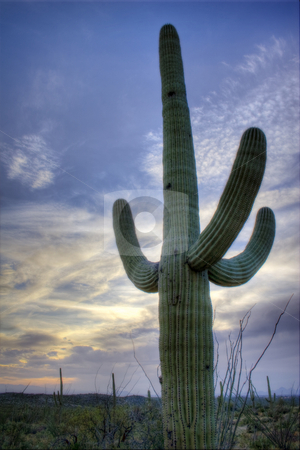 Saguaro National Monument, Tucson, Arizona stock photo, Nice spring desert nature scene in Saguaro National Monument, Tucson, Arizona. Saguaros, Ocotilla, Prickly Pear and Palo Verde Trees. by Jeff DeMent