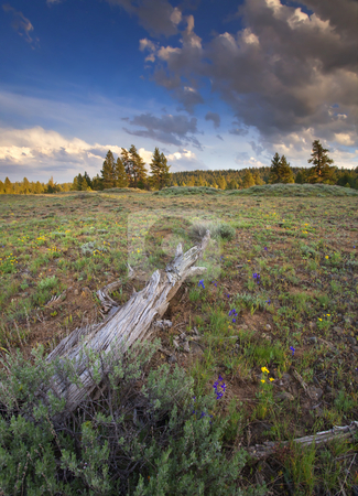 Under Stormy Skies stock photo, Larkspur dots Rocky Prairie as the sun reflects off passing storm clouds by Mike Dawson