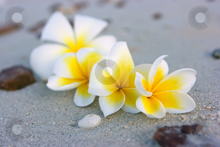 Tropical flower composition stock photo, Tropical flowers lying on the sand in Thailand by Dmitry Rostovtsev