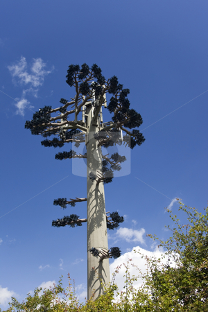 Secret communications stock photo, A communications mast disguised as a tree by Mike Smith