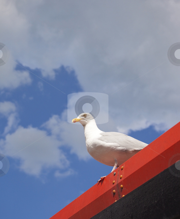 Herring gull  stock photo, A herring gull perched on a bright red metal roof under a cloudy summer sky by Mike Smith