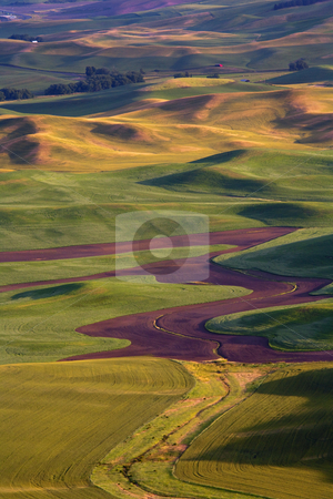 Golden Hills stock photo, The rolling hills of the Palouse gold under the setting sun. by Mike Dawson