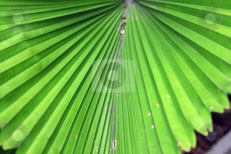 Tropical plant stock photo, Some green tropical plant looking like fan by Dmitry Rostovtsev