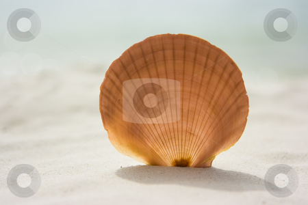 Seashell stock photo, Round shaped sea shell on the sand by Dmitry Rostovtsev