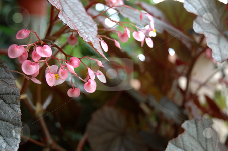 Flower stock photo, Tropical flower that growth well in indonesia by Bayu Harsa