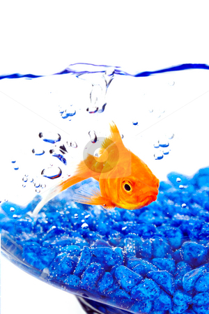 Goldfish in a bowl with bubbles and blue rocks stock photo, Goldfish in a bowl with bubbles and blue rocks by Vincent Demers