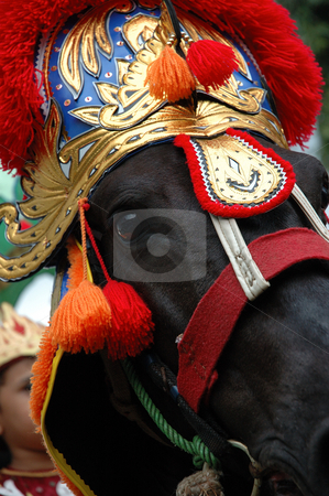 Renggong horse stock photo, Renggong horse-one of traditional ceremony heritage in indonesia by Bayu Harsa