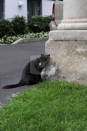 Black cat stock photo, Black cat rubbing head against column by Yann Poirier
