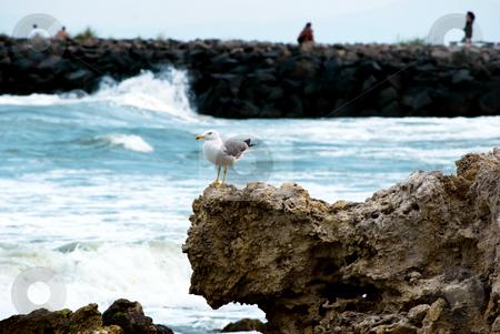 Seagull portrait and sea stones stock photo, Sea stones at the shore of Ravda Black Sea by Desislava Dimitrova