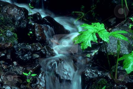 Creek stock photo, USA, Oregon, Columbia River Gorge, Creek Near Multnomah Falls by David Ryan