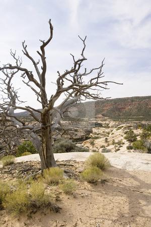 409 Desert scene stock photo, Dead tree in the desert in Uath by Sharron Schiefelbein