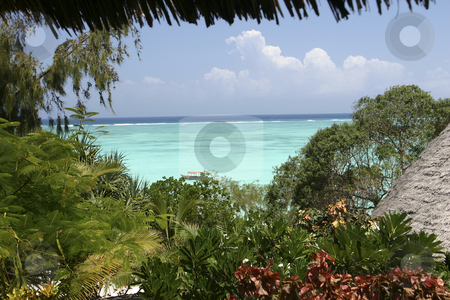 Resort in Zanzibar stock photo, A beautiful Resort on the Island of Zanzibar off the shores of Tanzania, Africa by Sharron Schiefelbein