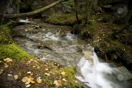 Stream in Robson Valley stock photo, A beautiful stream surrounds by a forest by Sharron Schiefelbein