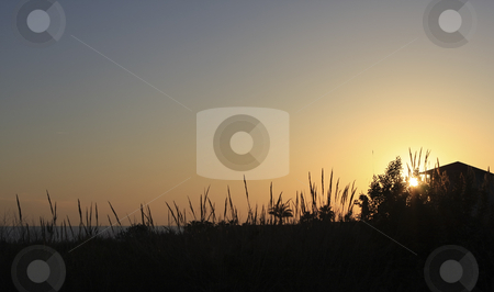 Sunset on the Mediterranean beach in Turkey stock photo, Tall grasses on the beach are silhouette as the sunsets by Sharron Schiefelbein
