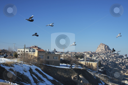 Pigeons in flight stock photo, Flying Pigeons over the underground city in Capadocia Turkey by Sharron Schiefelbein
