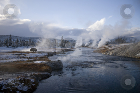 Yellowstone geyser and a Buffalo  stock photo, Buffalo grazing in by a steaming  geyser by Sharron Schiefelbein