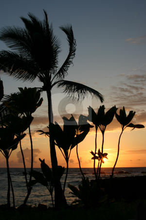 Sunset on the Big Island of Hawaii stock photo, Sun going down on the Big Island of Hawaii by Sharron Schiefelbein