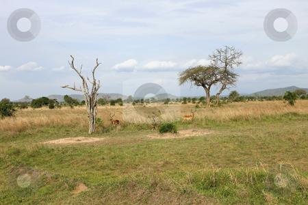 252 Wide landscape view of Mikumi National Park stock photo, Mikumi National Park in Tanzania Africa by Sharron Schiefelbein