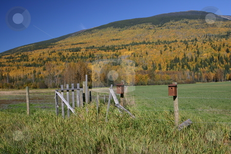 Bird houses in the fall stock photo, Two bird houses against fall colors on a mountain by Sharron Schiefelbein
