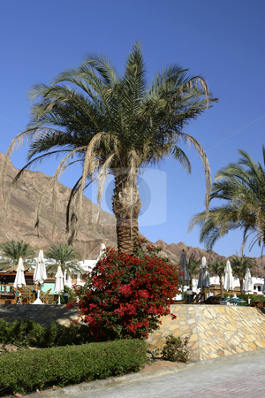 Resot in Dahab Egypt stock photo, Beautiful Resort with mountains in the background by Sharron Schiefelbein