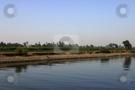 203 Banks of the Nile River stock photo, Green crops growing along the Nile River by Sharron Schiefelbein