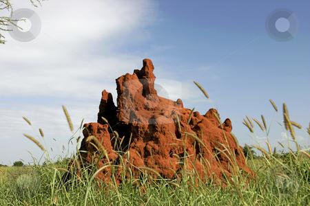 Termite Mound stock photo, A termite mound in Tarangire Park in Tanzania Africa by Sharron Schiefelbein