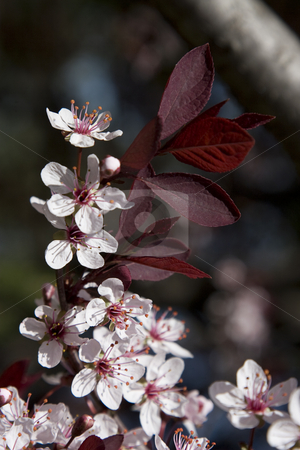 Whtie flower stock photo, Small white flower attach to a brach with red leaves by Yann Poirier