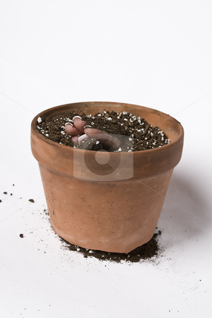 Sprouting finger stock photo, Women finger coming out of a pot of earth by Yann Poirier