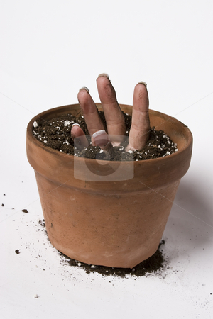 Sprouting hand stock photo, Women hand coming out of a pot of earth by Yann Poirier