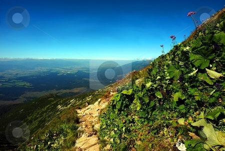 Pink flower over sky diagonal stock photo, Pink flower against blue sky in mountains summer day by Juraj Kovacik