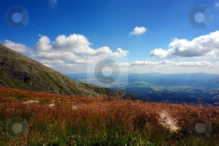 Mountain meadow with flower in foreground stock photo, Mountain meadow with flower in foreground in summer day with clouds on blue sky by Juraj Kovacik