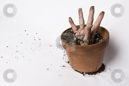 Stretching hand stock photo, Women hand stretching out of a pot of earth by Yann Poirier
