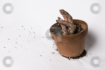 Growing hand stock photo, Women hand stretching out of a pot of earth with folded finger by Yann Poirier