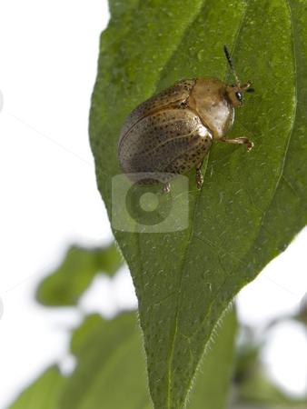Bug on a plant stock photo, Bug on green leaf over white background. by Ignacio Gonzalez Prado