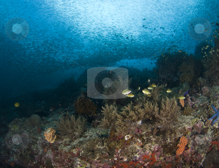 Philippine Wonderland Landscape stock photo, Scenic underwater view of the diversity of life on the reefs in the South China Sea by A Cotton Photo