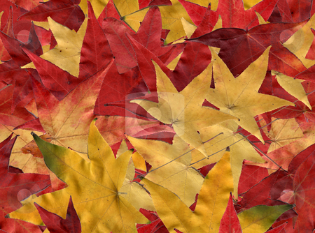 Autumn leaves stock photo, Autumn leaves, tiled to create a seamless background by Harris Shiffman