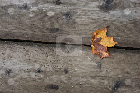 Fall is here stock photo, One yellow maple leaf on wood planks by Yann Poirier