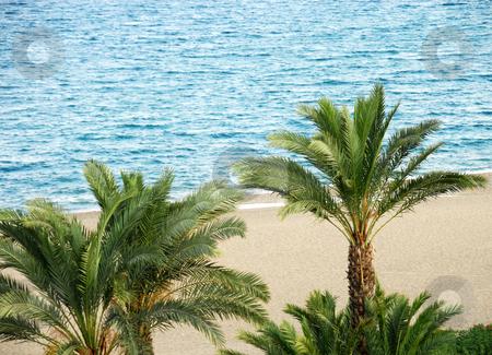 Palms on beach stock photo, Green palm trees on beach over blue sea by Julija Sapic