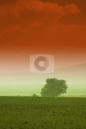 Tree behind a farm stock photo, Tree behind a farm in rural Utah by Mehmet Dilsiz