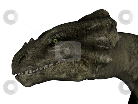 Wyvern head stock photo, 3D rendered fantasy wyvern on white background isolated. by Patrik Ruzic