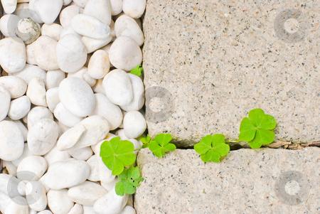 White pebble with green leaf stock photo, White pebble with green leaf in garden by Lawren
