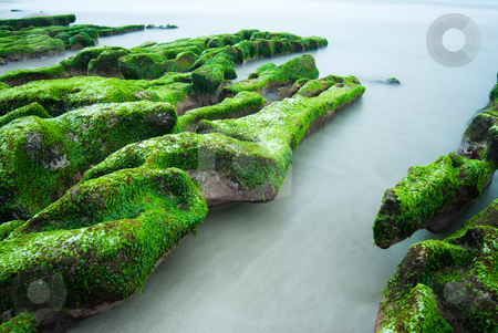 Green Rocky Seashore stock photo, Rocky Seashore with fresh seaweed, long time exposure, Taiwan, East Asia by Lawren