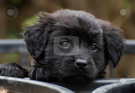 Curious puppy want to go out and play stock photo, Cute little puppy want to go out and play. sweet dog. by Lawren