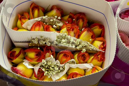Rose from rose farm in Ecuador. stock photo, A bouquet of yellow and red tipped roses from a farm in Ecuador, South America by Sharron Schiefelbein