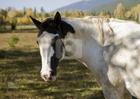 Horse  stock photo, Horse grazing in a field in the autumn sunlight by Sharron Schiefelbein