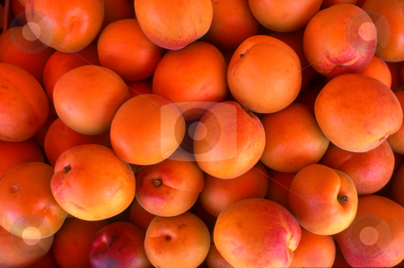 Apricots stock photo, Apricots by David Ryan