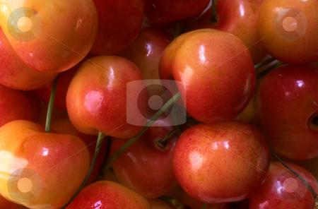 Queen Anne Cherries stock photo, Queen Anne Cherries by David Ryan