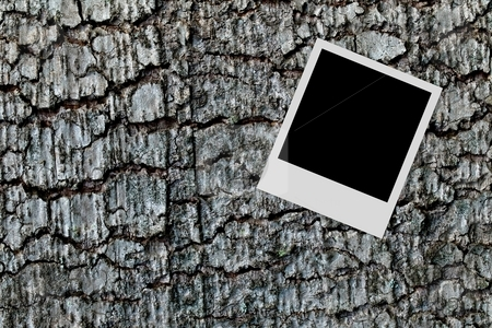 Empty photo frame on wood background stock photo, Empty photo frame on a tree trunk wood background by Laurent Dambies
